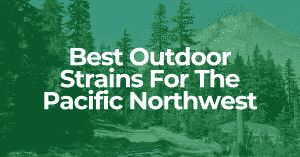 best outdoor strains for pacific northwest