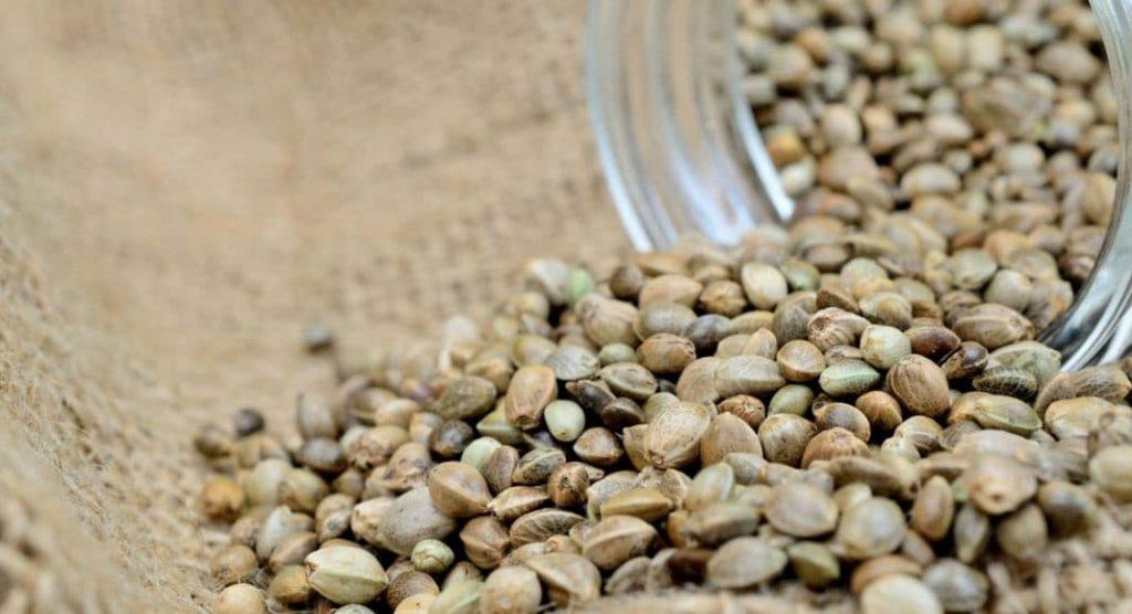 ILGM offers autoflower and feminized cannabis seeds