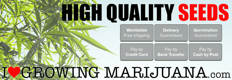 ilgm seed quality customer reviews