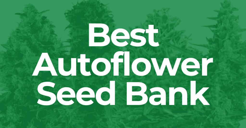 Best Autoflower Seed Bank